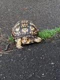 Que tartaruga bonita esta ? imagem de stock royalty free