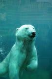 Quebec, bear in the Zoo sauvage de Saint Félicien Stock Photo
