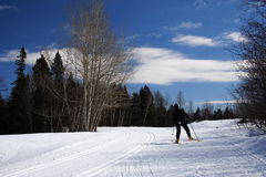 Quebec: Cross country skiing Royalty Free Stock Image
