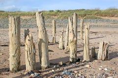 Quebra-mar de madeira velhos Fotografia de Stock Royalty Free