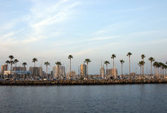Quebra-mar e palmeiras Imagem de Stock