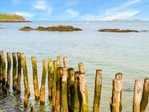 Quebra-mares de madeira no fluxo alto fotografia de stock