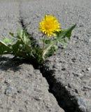 Quebra no asfalto Fotos de Stock Royalty Free