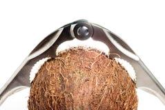 Quebra-nozes usada para tentar em vão quebrar um coco Imagem de Stock Royalty Free