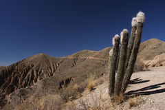 Quebrada Palala Cactus Royalty Free Stock Photos