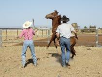 Quebrando um cavalo novo Fotos de Stock Royalty Free
