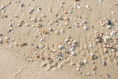Quebrar os escudos na praia é uma beleza natural imagem de stock