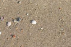 Quebrar os escudos na praia é uma beleza natural fotografia de stock royalty free