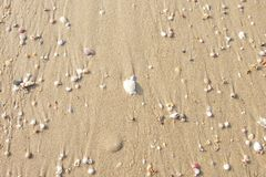 Quebrar os escudos na praia é uma beleza natural imagem de stock royalty free