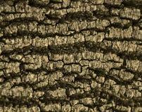 Quebras na casca Imagens de Stock