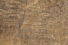 Quebras na seção do tronco de árvore com close-up pequeno dos detalhes ilustração royalty free