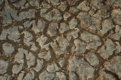 Quebras na terra seca em um prado Imagem de Stock