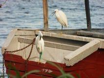 Quebrou o barco Fotografia de Stock Royalty Free