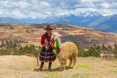 Quechua индигенная женщина с альпакой, Перу стоковая фотография rf