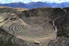 (Quechua) Moray, Peru Arkivbild