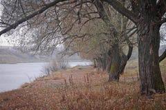 Queda Árvores no banco de rio coberto com as folhas Imagem de Stock