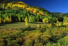 Queda adiantada nas Montanhas Rochosas Fotos de Stock Royalty Free