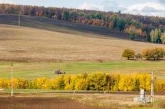 A queda arou o campo, uma grama de sega da grande ceifeira da árvore de salgueiro Imagem de Stock
