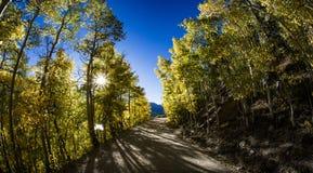 Queda Aspen Trees na estrada da montanha Imagem de Stock Royalty Free