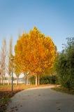 Queda Cena do outono imagens de stock