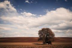 A queda colore a árvore grande sobre o céu azul foto de stock royalty free