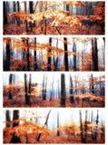 A queda colore a floresta imagens de stock royalty free