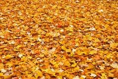 A queda colorida amarela vermelha sae na terra Fotos de Stock