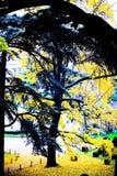 Queda colorida em um parque em Paris Árvore grande agradável foto de stock