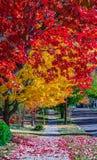 Queda colorida, meio de outubro em Novo Brunswick, Canadá fotografia de stock