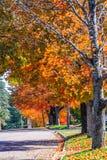 Queda colorida, meio de outubro em Novo Brunswick, Canadá foto de stock royalty free