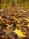 A queda coloriu as folhas Fotografia de Stock Royalty Free