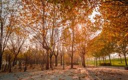Queda cores das árvores do outono imagens de stock