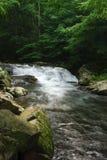 Queda da água do córrego Imagem de Stock