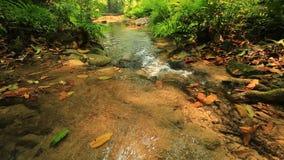 Queda da água na floresta video estoque