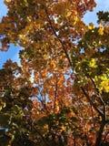 Queda da árvore Fotografia de Stock Royalty Free