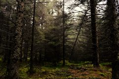 Queda da árvore Foto de Stock Royalty Free