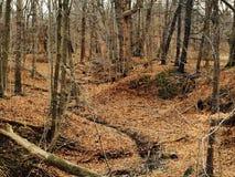 A queda da caminhada deixa a tomada da respiração das madeiras Imagens de Stock