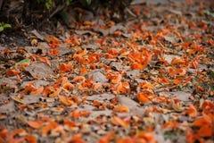 A queda da flor na terra Imagem de Stock