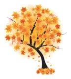 Queda da folha da árvore de bordo do outono do vetor Imagens de Stock