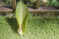 Queda da folha no jardim Imagem de Stock