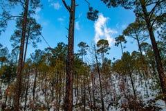 Queda da neve no campo da exploração agrícola da área dos montes com as árvores sobre as nuvens brancas e o céu azul, paisagem bo imagens de stock royalty free