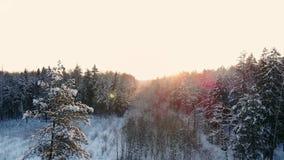 Queda da neve País das maravilhas do inverno nevar nevado luz do sol do crepúsculo do por do sol natureza das madeiras das árvore video estoque