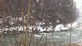 Queda da neve País das maravilhas do inverno nevar nevado natureza das madeiras das árvores de floresta Fundo do inverno país das filme