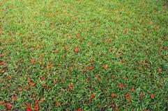 Queda das flores na grama verde Fotografia de Stock Royalty Free