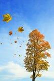 Queda das folhas Fotografia de Stock Royalty Free