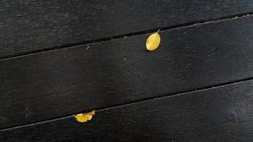 Queda das folhas Imagem de Stock