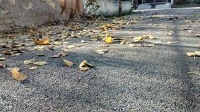 Queda das folhas da mola fotos de stock