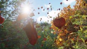 Queda das folhas de outono das árvores no parque do outono Parque colorido do outono em um dia ensolarado filme