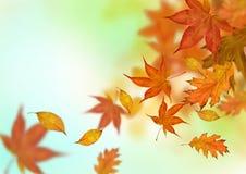 Queda das folhas de outono Imagem de Stock Royalty Free