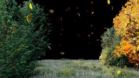 Queda das folhas de outono das ?rvores no parque do outono Parque colorido do outono em um dia ensolarado com canal alfa video estoque